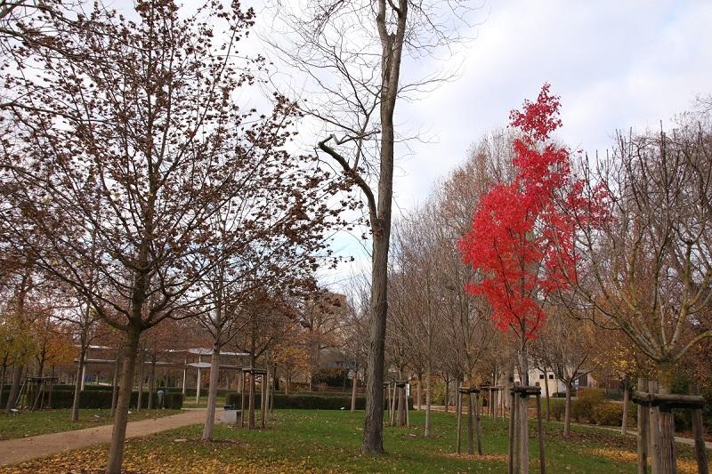Luthergarten in Wittenberg